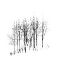 Winter. Beautiful winter mood Royalty Free Stock Images