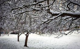 Winter. Park in snow white Royalty Free Stock Images
