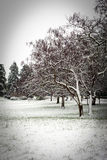 Winter. Park in snow white Stock Images