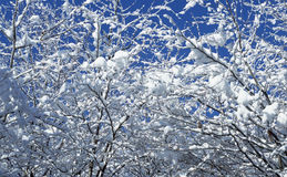 Winter. Close up view of winter nature Royalty Free Stock Photography