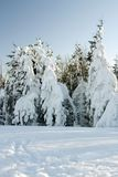Winter. In forest. Snow in forest Stock Photo