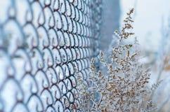 Winter. Stockbild