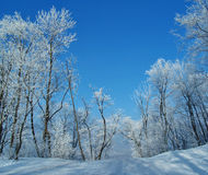 Winter. Road running between the frozen trees Royalty Free Stock Photography