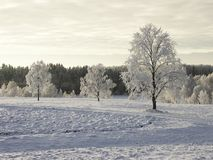 Winter Stock Photography