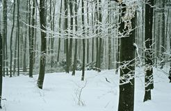 Winter. Forest Stock Photos