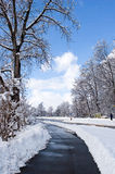Winter. Sunny day after a big snowstorm. Switzerland, March'2006 Royalty Free Stock Photo
