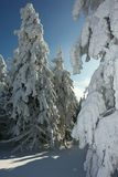 Winter. Snowy trees on Male Skrzyczne summit in Beskidy Mountains in Carpathian Mountains, Poland Royalty Free Stock Images