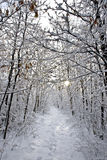 Winter. Beautiful wood in a snow. Winter stock image
