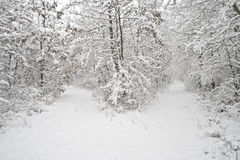 Winter. Beautiful wood in a snow. Winter Stock Photos