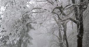 Winter. Scene at the park in december stock photo