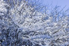 Winter. Background possible to use for printing and project Stock Photography