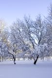Winter. Background possible to use for printing and project Royalty Free Stock Image