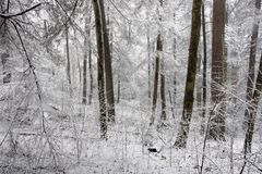 Winter. In the forest Royalty Free Stock Images