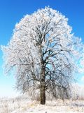 Winter.  Royalty Free Stock Photography