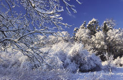 Winter. Landscape in the winter with snow Royalty Free Stock Photo