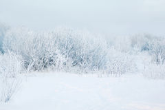 Winter abstract landscape background Stock Image