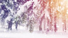 Winter Abstraktes Hintergrundmuster der weißen Sterne auf dunkelroter Auslegung Schneeflocken fallen auf Schnee im eisigen Morgen Stockbilder