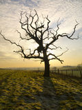 Winter-Ackerland - Yorkshire - England Stockfotografie