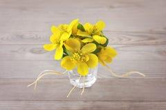 Winter aconite (Eranthis hyemalis) Royalty Free Stock Images