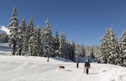 Winter Activities in Mt Bachelor Ski Resort Stock Photography