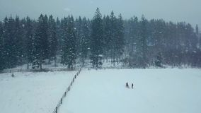 Winter aerial of young wedding couple running and having fun holding hands in heavy winter snowfall towards fir or. Spruce forest out of rancho fence. Snowy stock video
