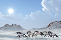WINTER AFTERNOON. A herd of wild horses run in the snows of a bright winter day Stock Image