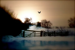 Winter Afternoon Walk. View of track through two gates set in snow and ice against a golden winter's afternoon sunset sky stock photos