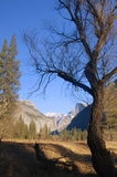 Winter Afternoon, Yosemite. Image of a bare tree in winter, captured on a cold January afternoon while hiking through Yosemite Valley in Yosemite National Park Stock Photos