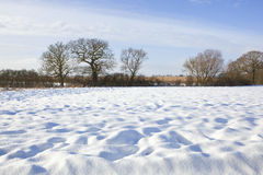 Winter agriculture Royalty Free Stock Images