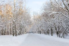 Winter alley Stock Photography