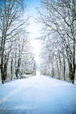 Winter alley. A winter alley snow street in blue tonality Royalty Free Stock Image