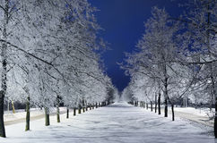 Winter Alley. With Snowy Trees In The Night Stock Image
