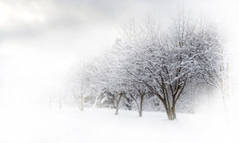 Free Winter Alley Beautiful Stock Image - 17867581