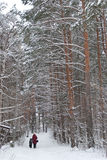 Winter alley. Mother and child walking through the beautiful winter forest stock image