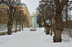 Winter alley and Catherine palace  in the Pushkin. Stock Photo