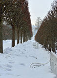 Winter alley and Catherine palace  in the Pushkin. Stock Photos