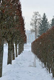 Winter alley and Catherine palace  in the Pushkin. Stock Photography