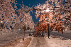 Winter alley with frozen trees and street light in Toronto Stock Images