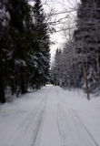 Winter alley in January. Royalty Free Stock Photos