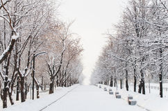 The winter alley Stock Photography
