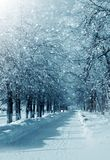 Winter alley. Winter landscape with trees in alley city park, snowstorm Royalty Free Stock Images
