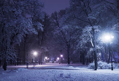 Winter alley at night. Winter alley in park and shining lanterns. Blue tone. Night shot Royalty Free Stock Photos