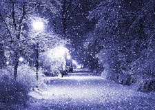 Winter alley at night. Winter alley in park and shining lanterns through snowing. Night shot. Blue tone Stock Image