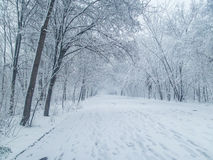 Winter alley in park Stock Image