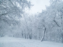 Winter alley in park Royalty Free Stock Photography