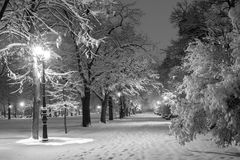 Winter city park in evening. Stock Photos