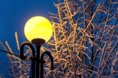 Winter alley in park and shining lanterns. Night shot. stock images