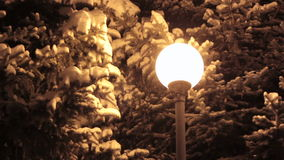 Winter alley in park and shining lanterns. Night shot. Winter alley in park and shining lanterns. Night shot stock footage
