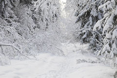 Winter alley Royalty Free Stock Photo