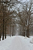 Winter alley in the Pushkin town, Stock Photos